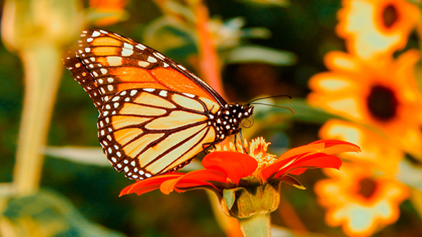 Pollination_Show