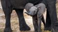 Elephants_Show